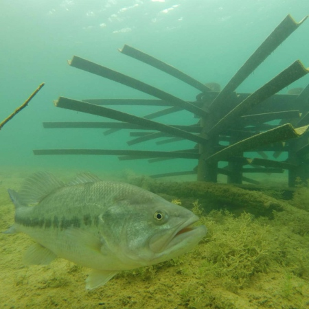 Mossback Fish City-3