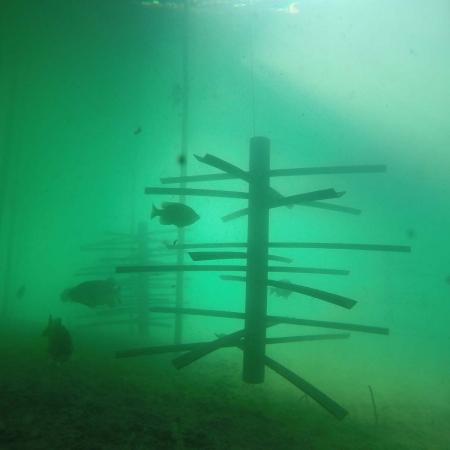Mossback Fish City-4
