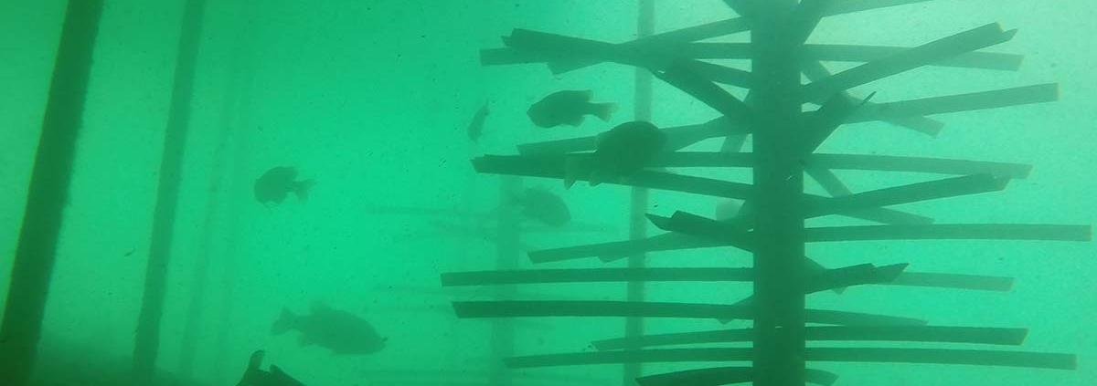 Mossback Fish City-5