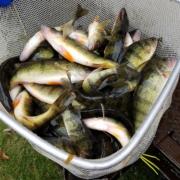 2020 Fall Fish Stocking